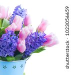 Pink Tulips And Blue Hyacinths...