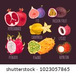 set of exotic fruit | Shutterstock .eps vector #1023057865