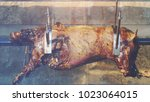 whole roasted pig on spit ... | Shutterstock . vector #1023064015