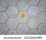 alone fallen maple leaf on the... | Shutterstock . vector #1023065989