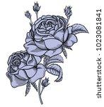 vector illustration blooming... | Shutterstock .eps vector #1023081841