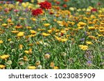 colorful flower glade. summer... | Shutterstock . vector #1023085909