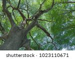 forest trees nature green wood... | Shutterstock . vector #1023110671