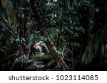 tortuguero rainforest and... | Shutterstock . vector #1023114085