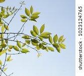 green tree branch | Shutterstock . vector #1023124765