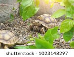 Stock photo close up african spurred tortoise resting in the garden slow life africa spurred tortoise 1023148297