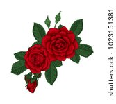 beautiful bouquet with red... | Shutterstock .eps vector #1023151381