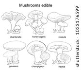 set coloring mushrooms russula  ... | Shutterstock .eps vector #1023176599