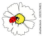Ladybug Insect Nature On Daisy...