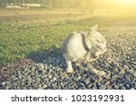 little cat itch in the outdoor | Shutterstock . vector #1023192931