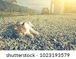 little cat in the outdoor | Shutterstock . vector #1023193579
