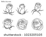 rose vector set by hand drawing.... | Shutterstock .eps vector #1023205105