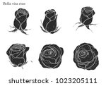rose vector set by hand drawing.... | Shutterstock .eps vector #1023205111