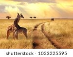 group of giraffes in a national ... | Shutterstock . vector #1023225595
