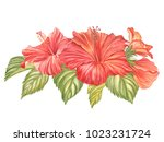 Red Hibiscus Flower Isolated On ...