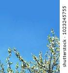 springtime. flowering orchard.... | Shutterstock . vector #1023245755