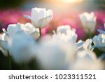 amazing nature spring concept... | Shutterstock . vector #1023311521