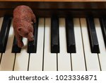 Brown Toy Bear On Keyboard Keys ...