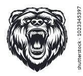 Vector Roaring Bear Isolated O...
