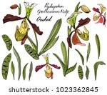isolated orchid paphiopedilum...