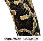Boa Snake Skin Pattern From...
