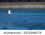 little egret  egretta garzetta  ...   Shutterstock . vector #1023368179