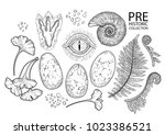 prehistoric graphic collection... | Shutterstock .eps vector #1023386521