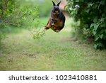 Stock photo free german rabbit easter bunny happily bock jumping in green garden between bushes european 1023410881