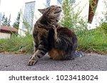 a cat scratches itself. a cat... | Shutterstock . vector #1023418024