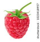 Ripe Raspberry With Green Leaf...