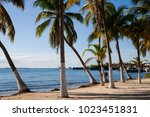 palms in isla mujeres  mexico | Shutterstock . vector #1023451831