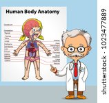doctor and human body anatomy | Shutterstock .eps vector #1023477889