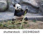 toronto  canada   march 12 ... | Shutterstock . vector #1023482665