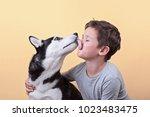 a dog of the husky breed licks... | Shutterstock . vector #1023483475
