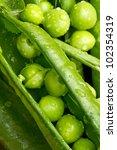 A Macro Shot Of Fresh Peas