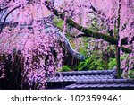 kyoto  japan   07 april 2017 ... | Shutterstock . vector #1023599461