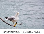 A Seagull Is Standing On The...