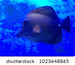 cute fish swimming in the ocean | Shutterstock . vector #1023648865