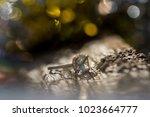 wedding rings. close up | Shutterstock . vector #1023664777