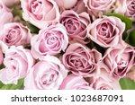 Lilac Garden Rose. Bouquet...