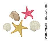 shells and starfish on white...   Shutterstock . vector #1023690481