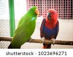eclektus couple in a zoo | Shutterstock . vector #1023696271
