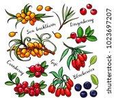 berries vector set  sea...   Shutterstock .eps vector #1023697207