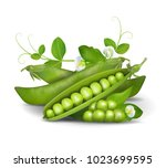 green peas. photo realistic ... | Shutterstock . vector #1023699595