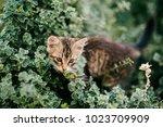 lonely little kitten hiding in...   Shutterstock . vector #1023709909