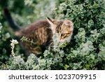 lonely little kitten hiding in...   Shutterstock . vector #1023709915