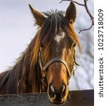 Small photo of Kentucky friendly curious horse-Animal photography.