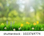 grass and spring flowers... | Shutterstock . vector #1023769774