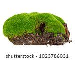 green moss on white background | Shutterstock . vector #1023786031