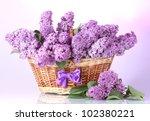 beautiful lilac flowers in... | Shutterstock . vector #102380221